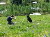 How to get a Labrador retriever's attention