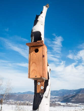 One of our neighbor's new nest boxes on an aspen that burned last summer