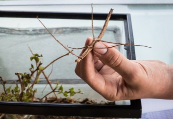 A stick bug. Dave was sharing them with friends.