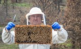 Ken and his bees.