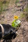 Sky stops to smell a late balsamroot