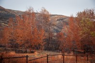 Also along the Twisp River. Evidence of the fire that burned this summer. Retardant makes the trees even more colorful than usual.
