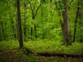 Deep green woods