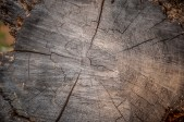 Tiny growth rings
