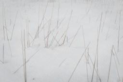 Last year's grasses.