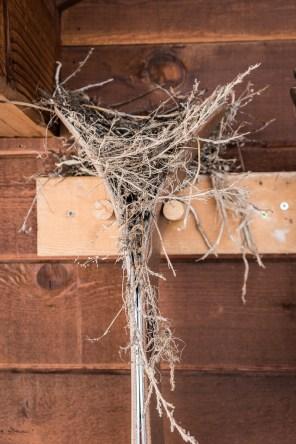 Robin's nest on my Hok skis