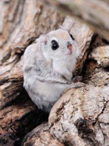 flying squirrel diet myexoticworld.com