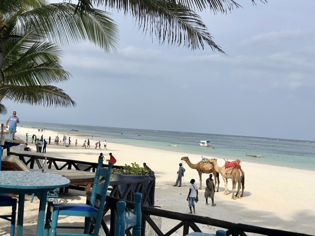Camels on the Beach Kenya