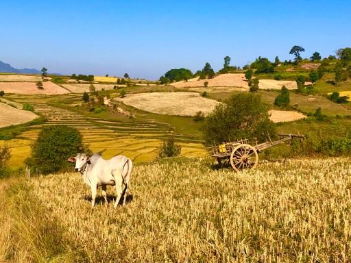 Kalaw Myanmar