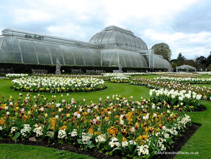 The iconic Palm House with a formal parade of tulips at Kew Gardens.