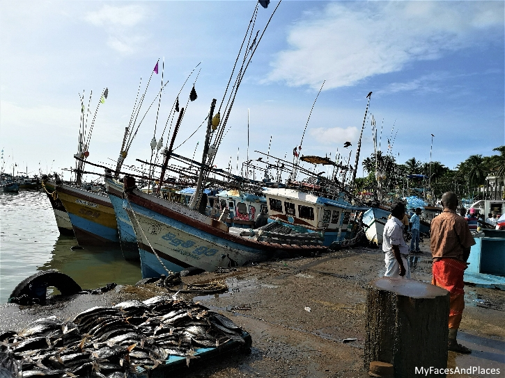 The fishing port and fish market at Tangalle.