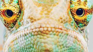 omsi reptile exhibit