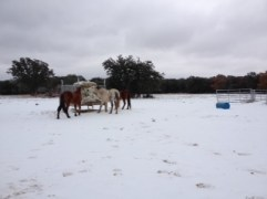 Horse Photo - Horse around the round bale covered in ice