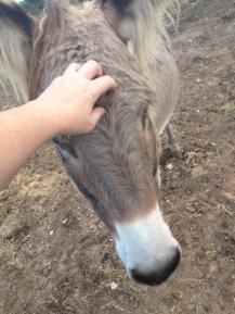Donkey Photo - Mama Rose the donkey