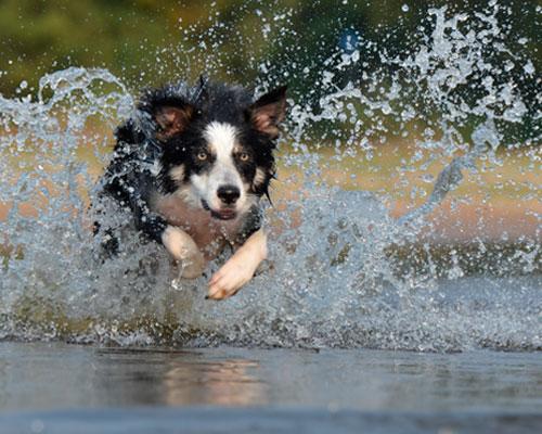тренер для собаки