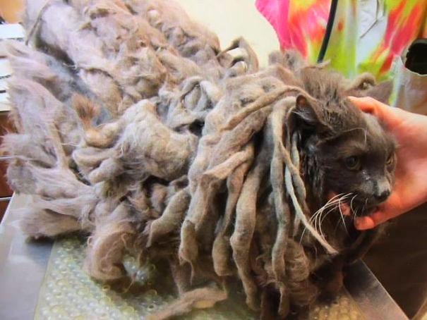 Сильно заросшего кота подбросили в приют