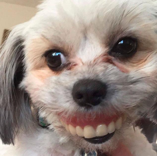 Укравшая вставную челюсть собака набирает популярность в соцсетях