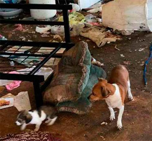 Спасены более 20 собак, которых содержали в ужасных условиях