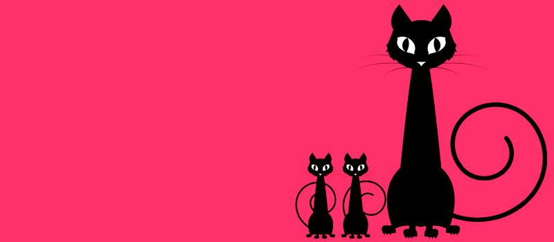 Если моя кошка породистая и я хочу котят?
