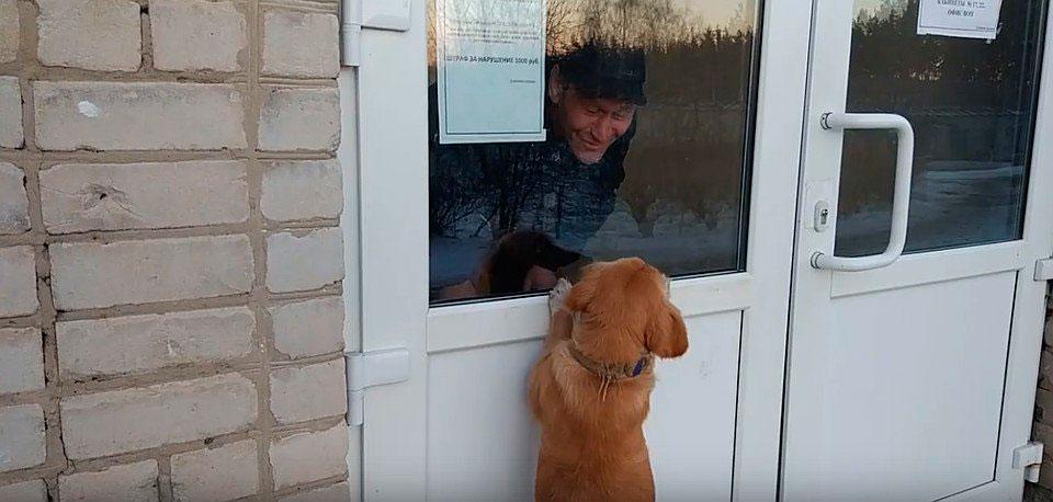 Преданный пес месяц ждет хозяина у больницы