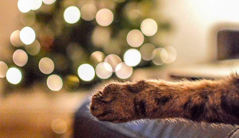Как уберечь питомца от новогодних украшений