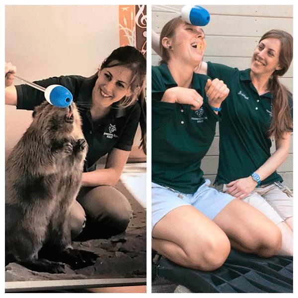 Кристи кормит голодного дикого кабана
