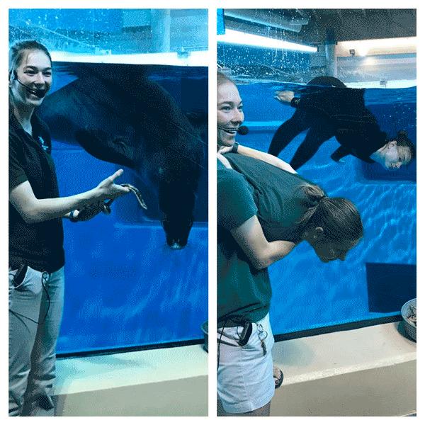Работники зоопарка повторили на фотографиях снимки своих подопечных