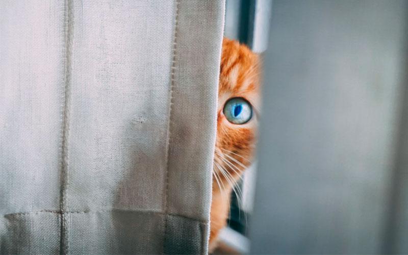 посещайте ветеринара