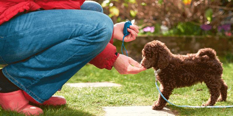 Дрессировка – это важнейший этап развития, обретения новых навыков, привычек для вашей собаки