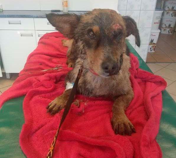 у пса не было видимых повреждений, кроме пореза