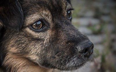 Ввели запрет на умерщвление пойманных бездомных животных