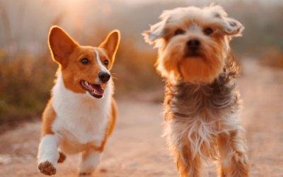 Ученые установили лучший способ тренировки собак