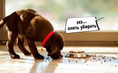 как сделать чтобы собака не разбрасывала корм
