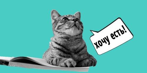 Почему котенок слишком быстро ест
