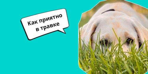 Почему моя собака катается по траве
