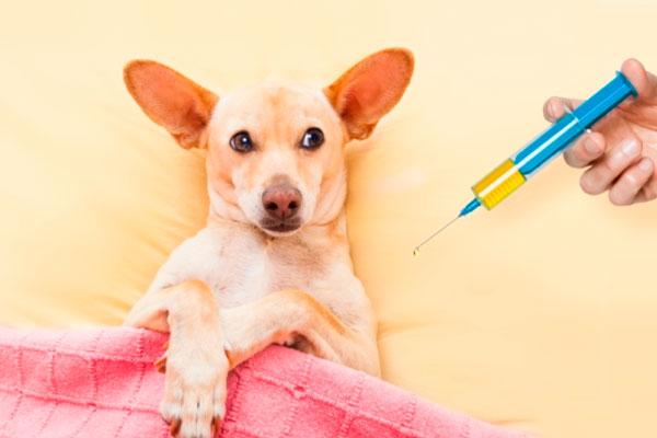 Вакцинация животных