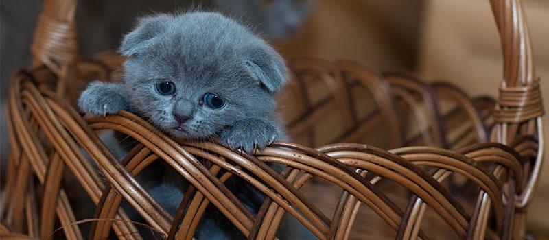 Когда кошке необходимо поменять корм. Из котенка в кота