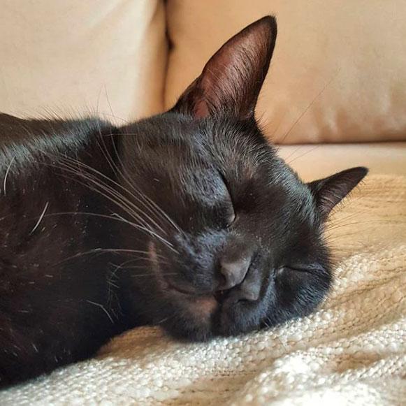 Кот с двойным носом стал популярным в соцсетях
