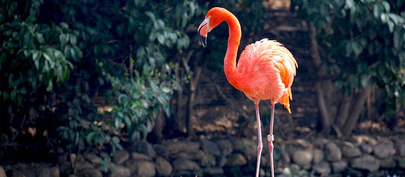 Колени фламинго находятся не там, где мы думали