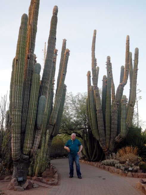 botanical garden big cactus