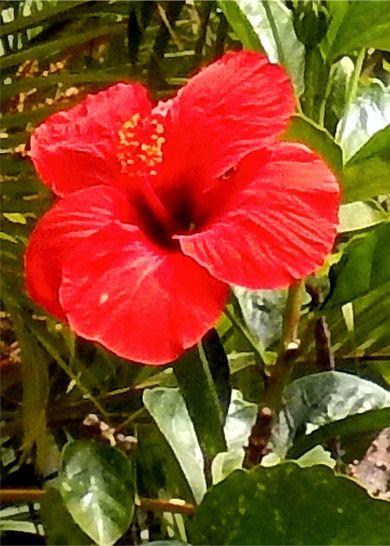 Punta Cana Day 2 1