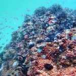 Kirra Reef Coolangatta