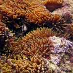 NSW Scuba Diving Solitary Islands Anemone Bay