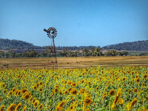 Beautiful Sunflower Fields Brisbane To Allora Countryside Road Trip Circuit My Favourite Escapes