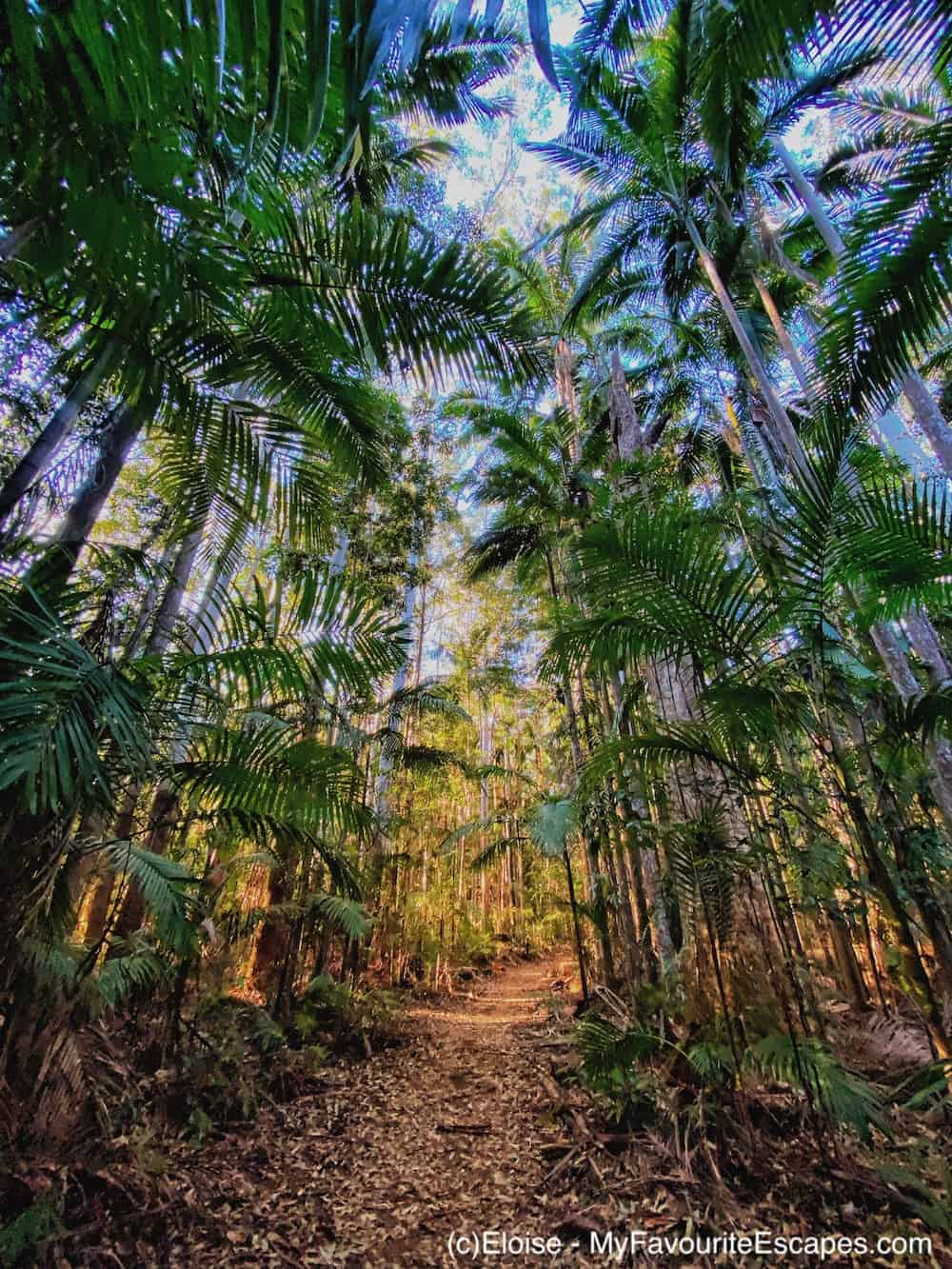 Palm tree forest on Somerset Trail