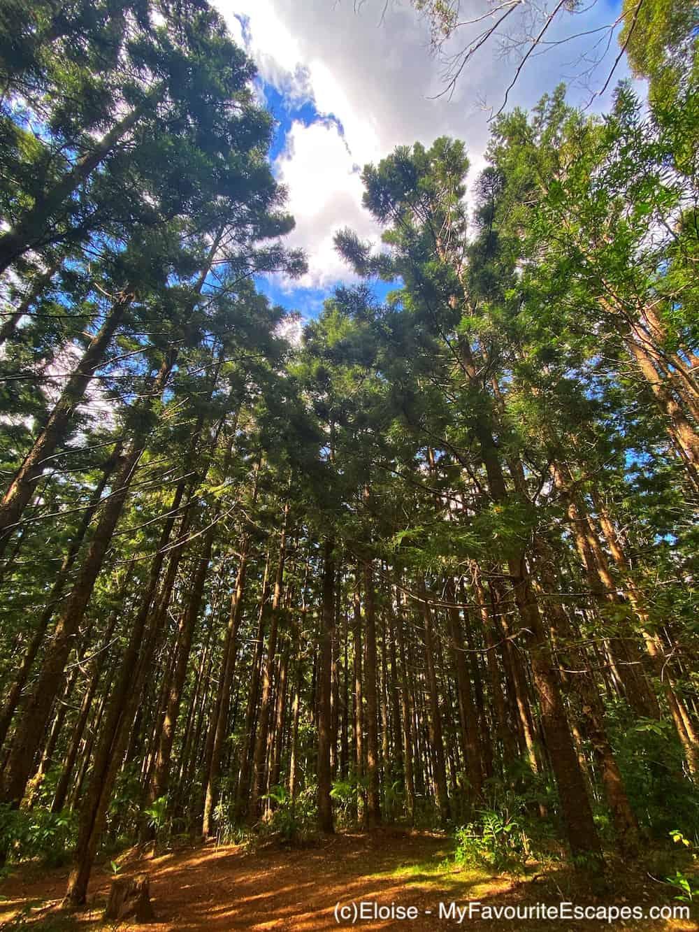 Woodland on Somerset Trail