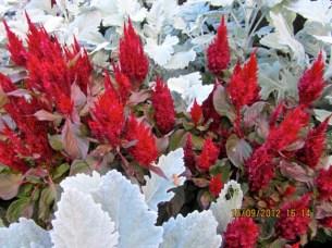 Natural Colours-Royal Botanical Gardens, Burlington, Ontario.