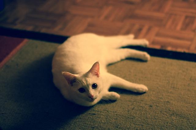 best cat urine repellent