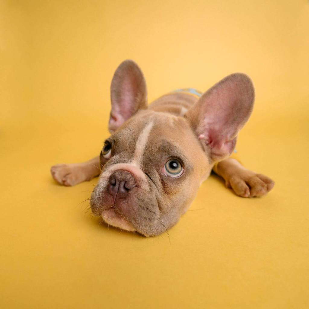Ear Cleaner For Dogs - Essential For A Happy and Healthy Pet - My Financial Hill