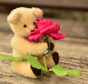 Whatsapp teddy bear images dp